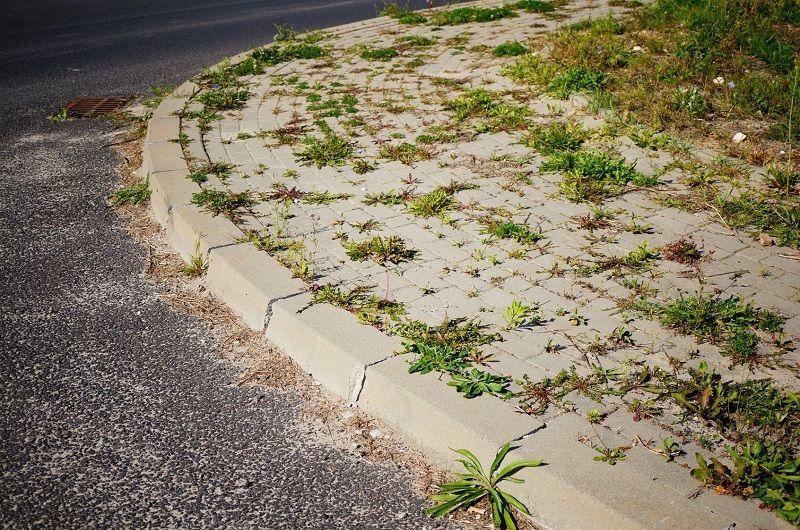 Agrowłóknina – skuteczny sposób na eliminację chwastów i zwiększenie plonów